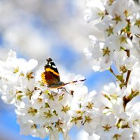 Весна в Шампейне. :: Марина Романова