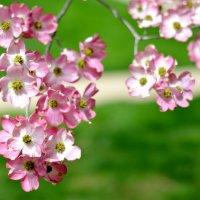 Весна в ярком цвете :: Марина Романова