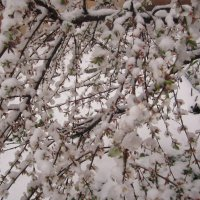 Весна и снег :: Неля