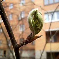Факел весны :: Елена Семигина