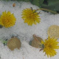 Одуванчики - это деньги весны... :: Алекс Аро Аро