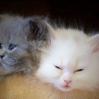 Сон и грезы :: ОлегХ