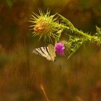 Природа :: Анна Кокарева