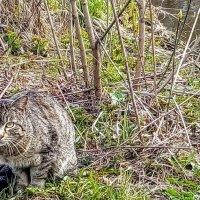 Дикая кошка. :: Larisa Ereshchenko