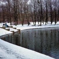 Прикормленное место... :: Sergey Gordoff
