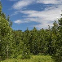 На лесной опушке :: Игорь Сикорский