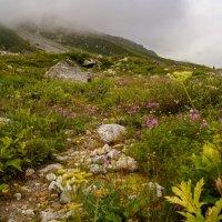 Август в горах :: Ольга СПб
