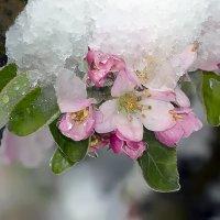 Половину апреля снега замели... :: Валерий Басыров