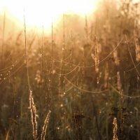 природа на рассвете :: Ольга (Кошкотень) Медведева