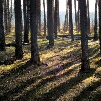 Лесной рассвет...5 :: Андрей Войцехов