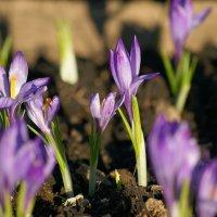 Весна пришла. :: Светлана Т