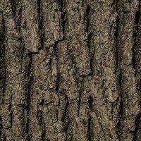 4 фон дерево ясень :: Василий Шестопалов