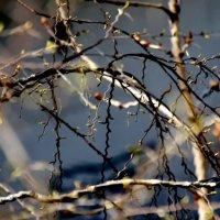 Веселая  весна... :: Валерия  Полещикова