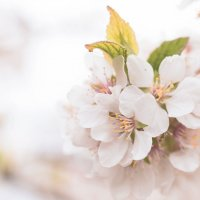 Весна :: Roman Globa