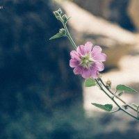 аленький цветочек :: Павел Беляев
