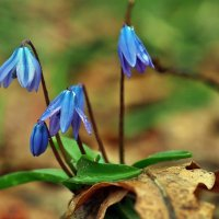 Весны этюды. Март... :: Александр Резуненко