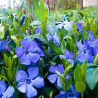 Синий цветочек :: Valentina Ariel