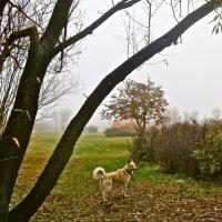 встреча в утреннем тумане :: Елена