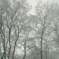 кружева за окном :: Miko Baltiyskiy