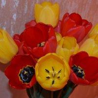 Тюльпаны :: Дарья Логвинова