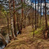 На берегу реки :: Валерий Толмачев