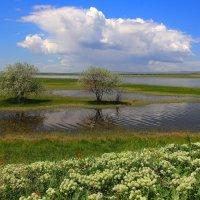 Весна :: Сергей Мурзин