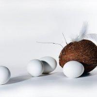 Хорошему фотографу кокос не мешает. :: Владимир Владимир