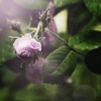 Цветок :: Оксана Сергеева