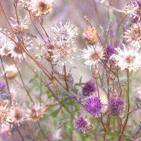 Полевые цветы :: Оксана Сергеева
