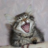 Сонный зверь :: Натали