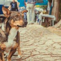 пёс, Абхазия :: Ruslan --