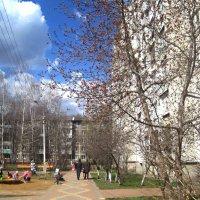 В конце апреля :: Елена Семигина