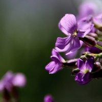 Цветики... :: Валерия  Полещикова