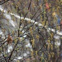 Весна  все таки  пришла в  Москву! :: Виталий Селиванов