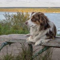 Незнакомая собака. :: Алена Малыгина
