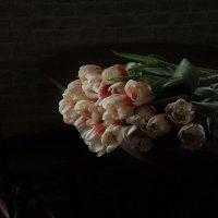 Тюльпаны :: Ирина Горовик