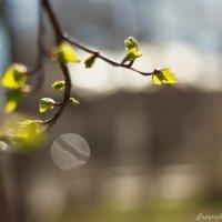 Солнечные зайчики весны :: berckut 1000