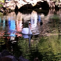 Есть в графском парке черный пруд :: Татьяна Ломтева
