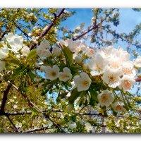 Весна. :: Чария Зоя
