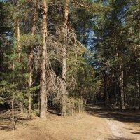 Лесов мещёрских вековечные поверья... :: Лесо-Вед (Баранов)
