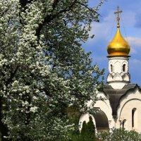 Пора цветения - пора возрождения! :: Николай Кондаков