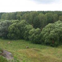 Путешествие. Тучи деревьев) :: Светлана Сейбянова