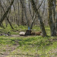 Весенний лес :: Игорь Сикорский