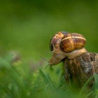 Весна располагает к знакомству!.... :: Александр Сыроватка