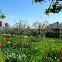 Весна в монастырском саду... :: Тамара (st.tamara)
