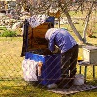 весенние заботы пчеловода :: linnud
