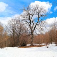 Последний снег белеет по лесам.. :: Андрей Заломленков