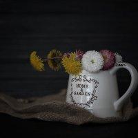 Полевые цветы :: Anna Drobyazko