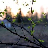 Весенние закаты :: Катя Бокова