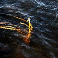 Купаясь  в волнах... :: Валерия  Полещикова